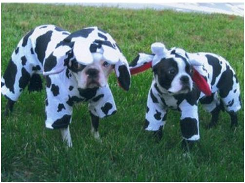 Cute Dog Costumes