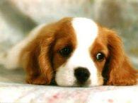 sad-puppy- face
